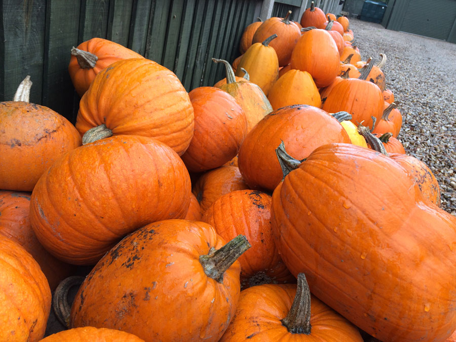lots of pumpkins, orange, halloween, recipes